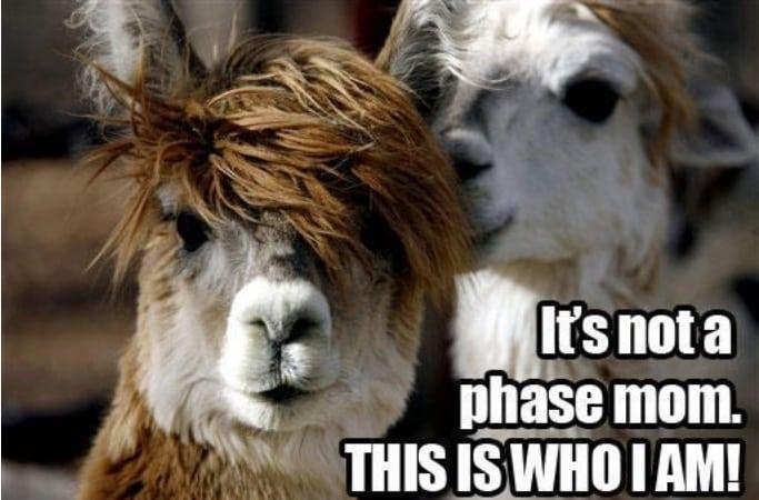 19 причесок, доказывающих, что вы и парикмахер видите по-разному...