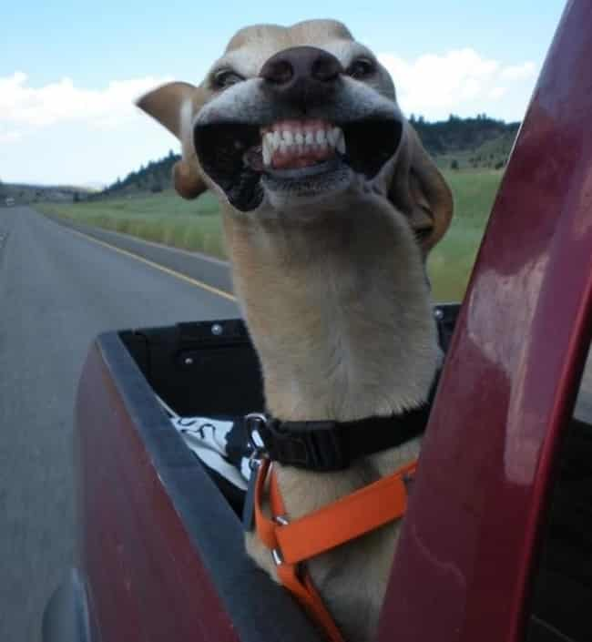 15 + собак, которые получают от жизни все что хотят!