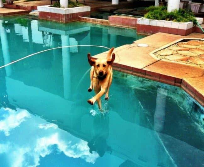 15 + собак, которые получают от жизни все что хотят! рис 3