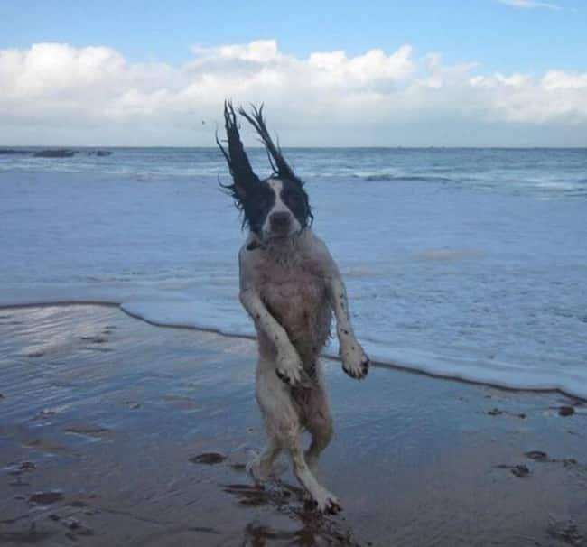 15 + собак, которые получают от жизни все что хотят! рис 10