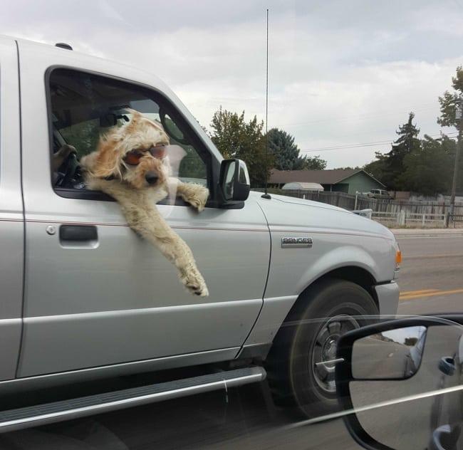 15 + собак, которые получают от жизни все что хотят! рис 8