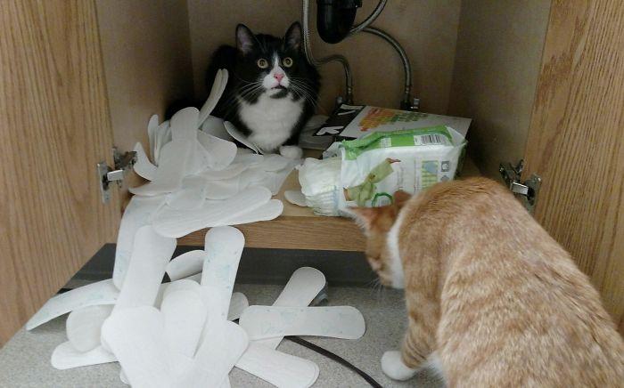 Заведите кота, говорили они... Будет весело, говорили они... рис 4