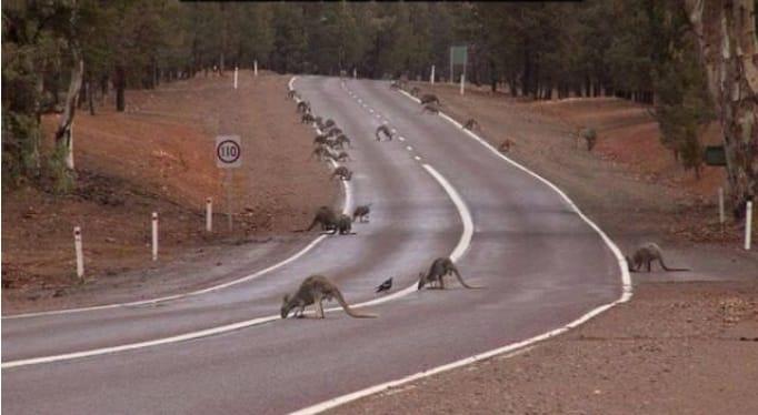 12 ситуаций, в которые вы можете попасть только в Австралии! рис 6