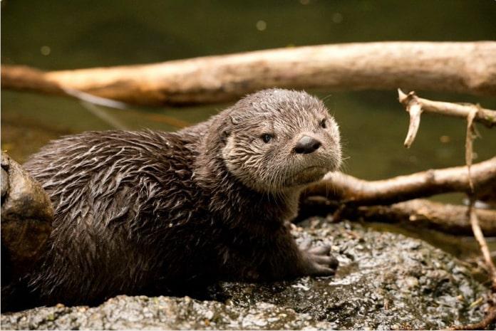 15 смешных отзывов о животных, если бы мы покупали их онлайн!