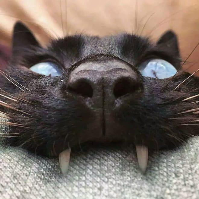 15 котов, которых хлебом не корми, дай укусить что-нибудь!
