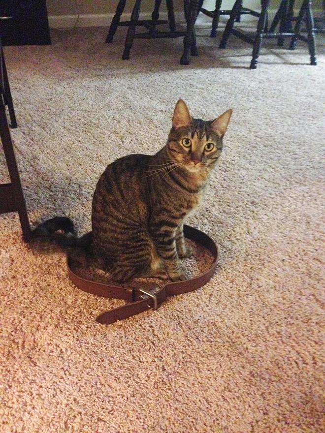 14 доказательств того, что если на полу есть круг, в нем появится кошка!