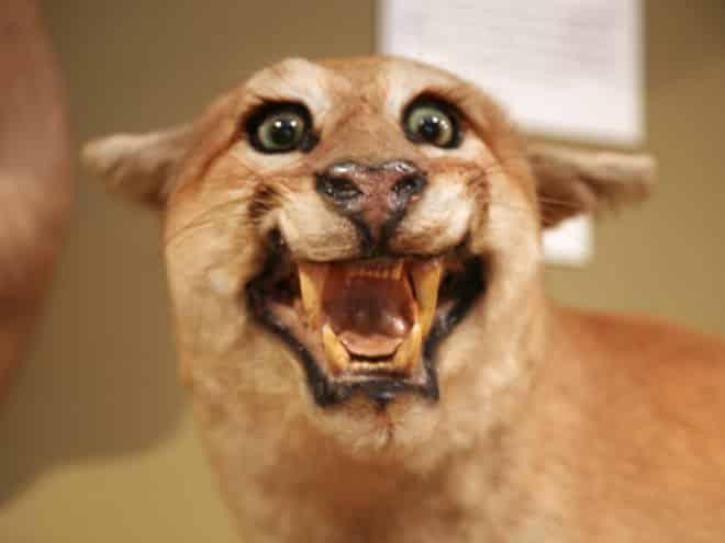 20 упоротых чучел животных со всего интернета! рис 6