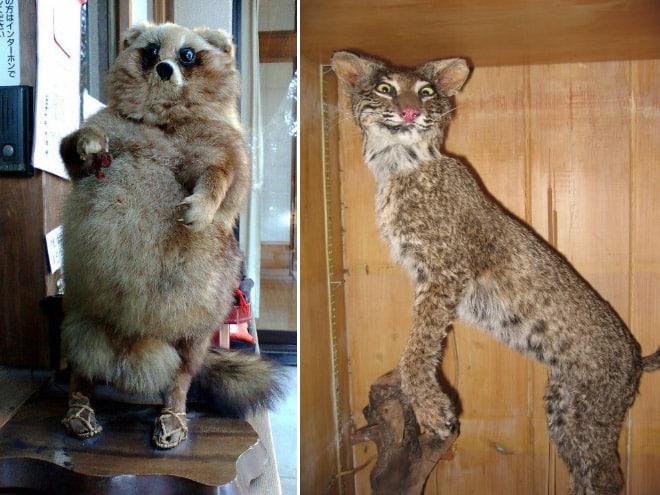 20 упоротых чучел животных со всего интернета! рис 12