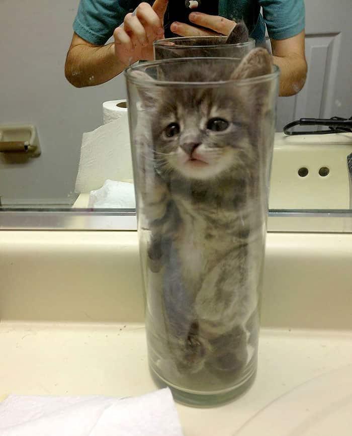 funny-liquid