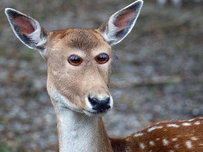 Как бы выглядели эти 20 животных с глазами спереди!