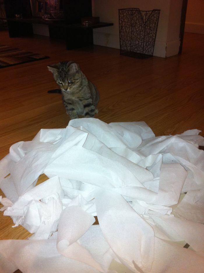 Заведите кота, говорили они... Будет весело, говорили они...