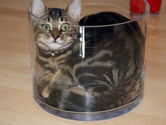20 неоспоримых доказательств того, что коты все-таки жидкость!