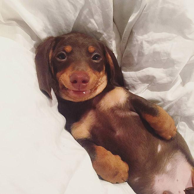 18 собак-улыбак со всего интернета!