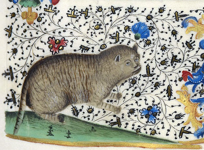 10 + фото, смешных котов Средневековья! рис 2
