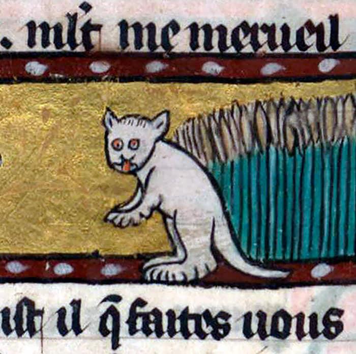 10 + фото, смешных котов Средневековья! рис 3