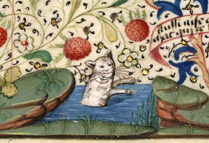 10 + фото, смешных котов Средневековья! рис 7