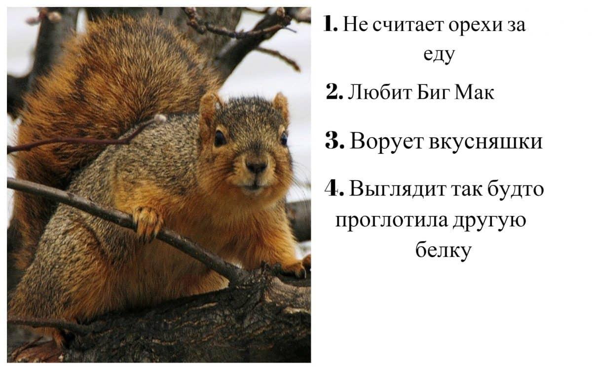 15 смешных отзывов о животных, если бы мы покупали их онлайн! Часть II15 смешных отзывов о животных, если бы мы покупали их онлайн! Часть II