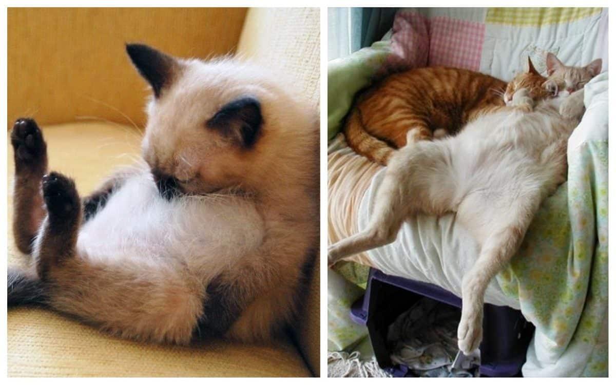 17 котов, в совершенстве овладевших искусством сна!