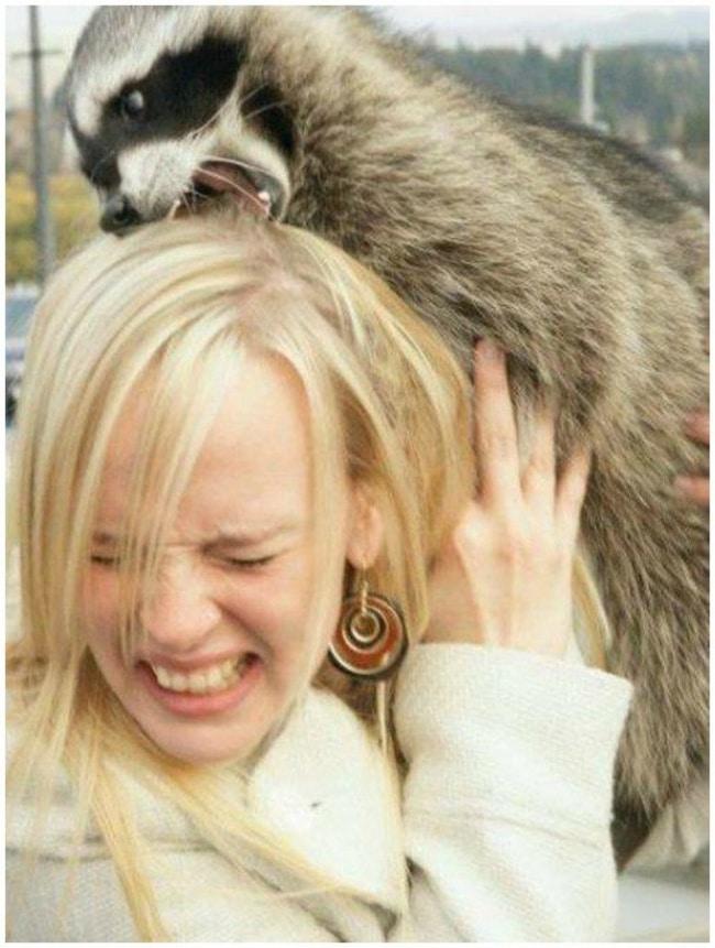 15 + смешных животных, которые откровенно издеваются над своими хозяевами! рис 11
