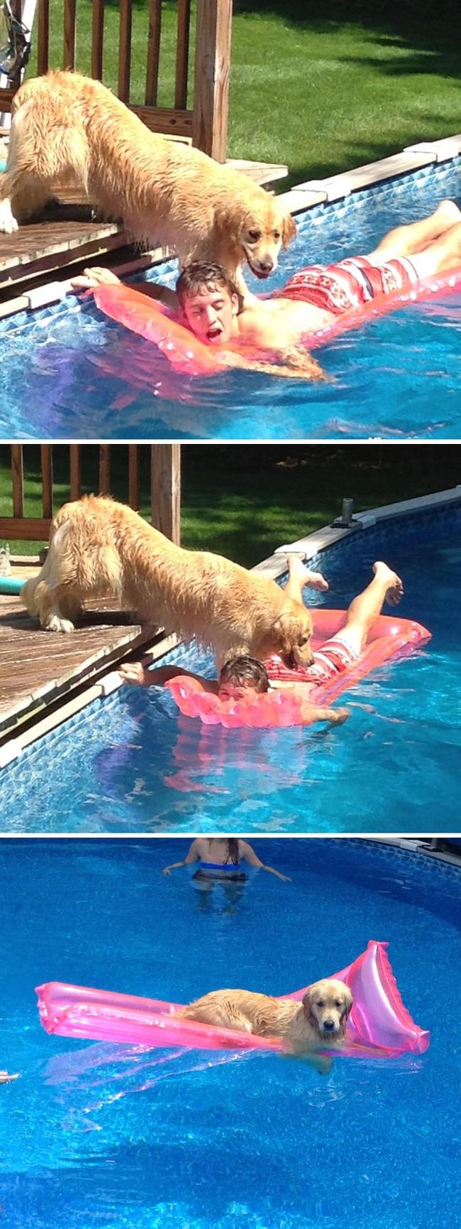 15 + смешных животных, которые откровенно издеваются над своими хозяевами! рис 12
