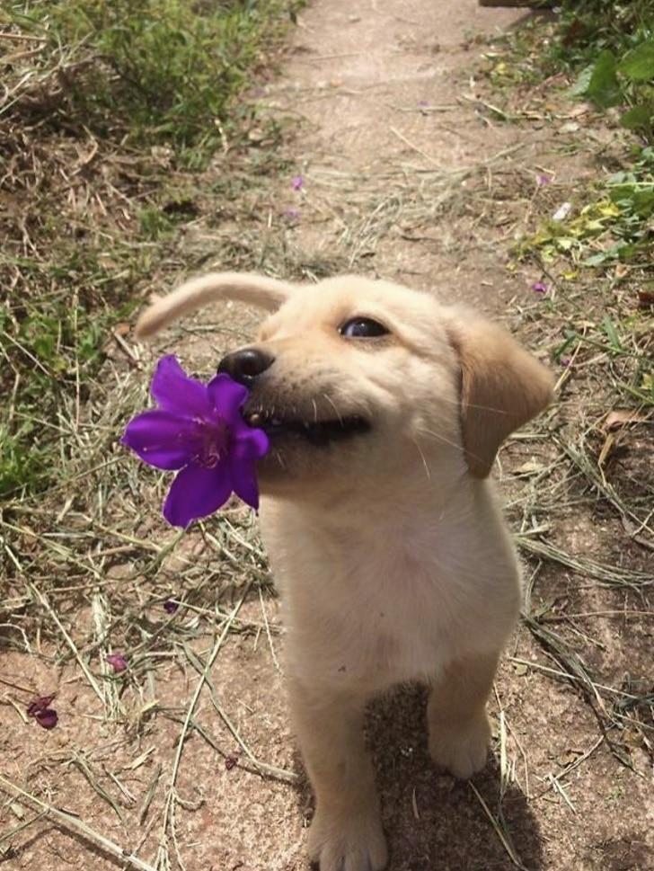 16 собак, которые готовы достать для своего хозяина все что угодно. рис 14