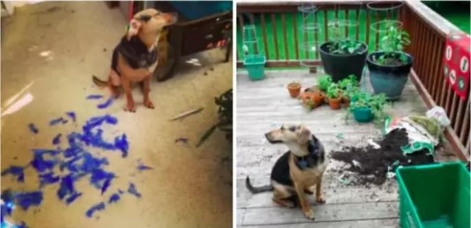 """19 собак, которые """"отличились и спалились""""!"""