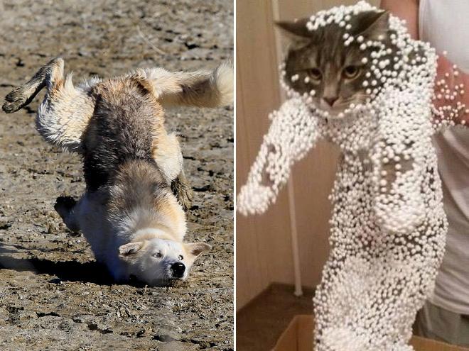 Epic Fail: 18 животных, от которых отвернулась удача