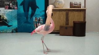 20 гифок птиц, которым взяли и пририсовали руки!