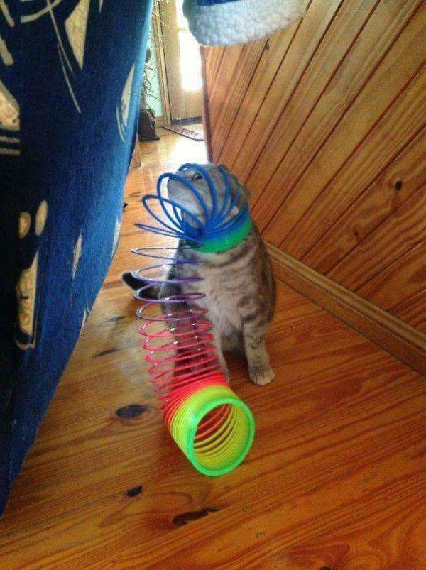 16+ котов, которые пожалели о своем решении... рис 20