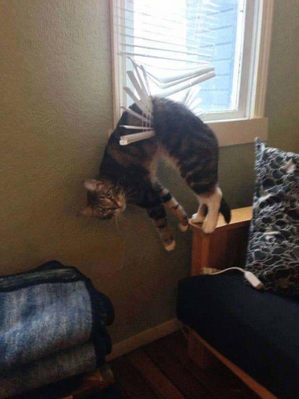 16+ котов, которые пожалели о своем решении... рис 13