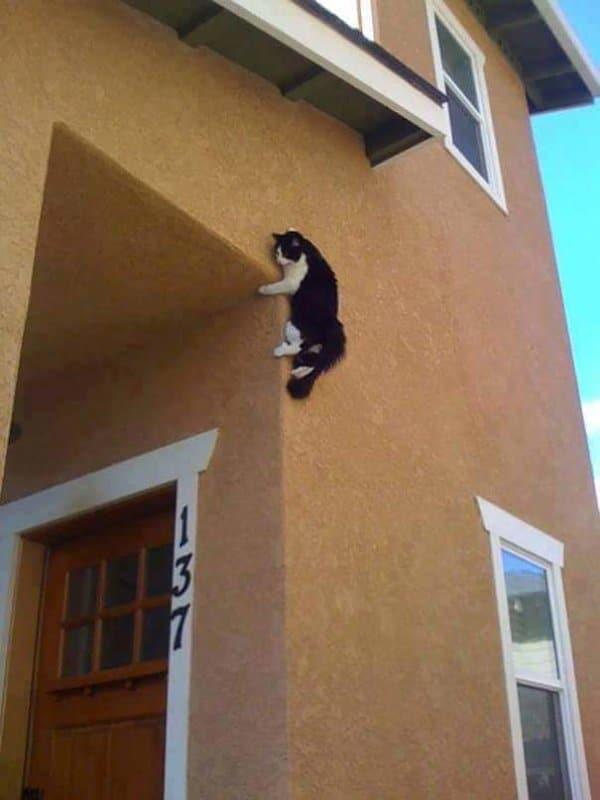 16+ котов, которые пожалели о своем решении... рис 16