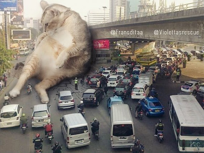 Котзиллы в городе! 17 ярких работ индонезийского художника