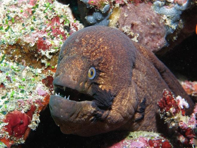 16 доказательств того, что мурены - самые смешные обитатели морей! рис 12