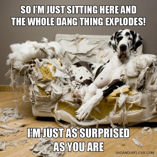 16 собак, которые переплюнули котов по части плохого поведения