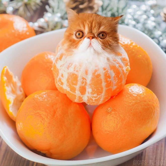 18 кошек маскируются под еду с легкой руки российской художницы! 7