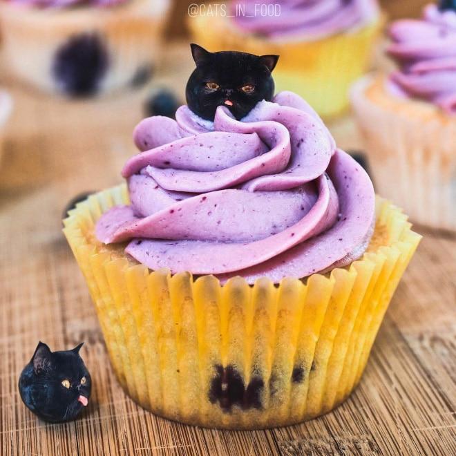 18 кошек маскируются под еду с легкой руки российской художницы! 1