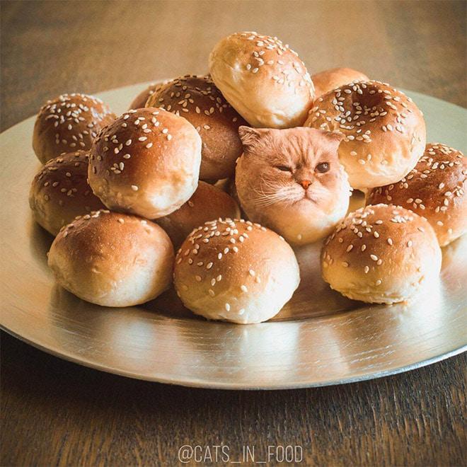 18 кошек маскируются под еду с легкой руки российской художницы! 15