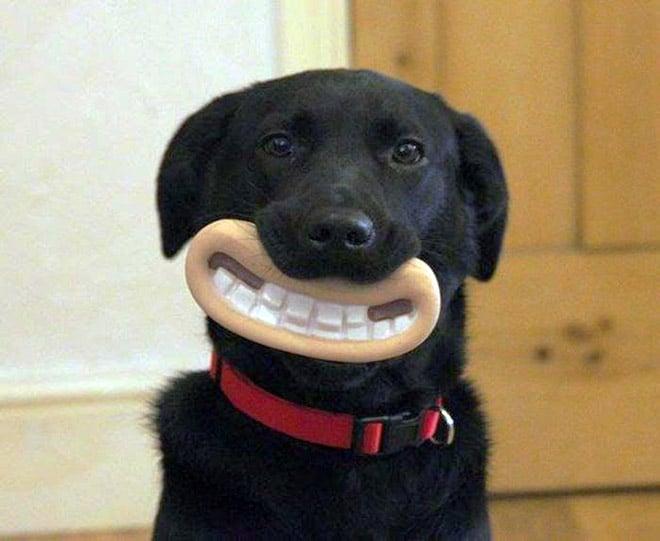 15 смешных игрушек для собак, которые сделают их неотразимыми!15 смешных игрушек для собак, которые сделают их неотразимыми!
