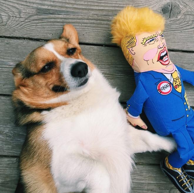15 смешных игрушек для собак, которые сделают их неотразимыми!
