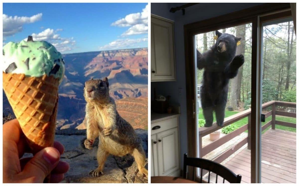19 смешных фото прямиком из царства животных!