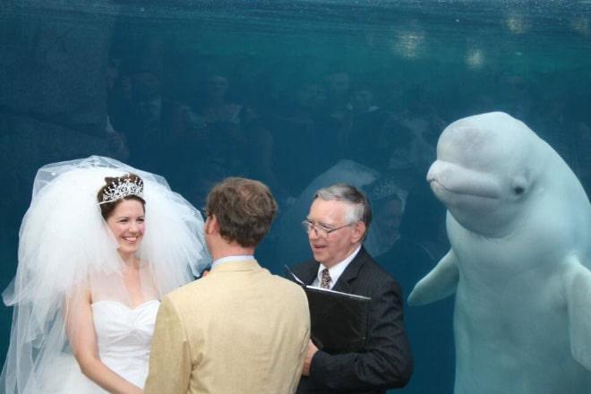 20 случайно испорченных снимков со свадьбы, ставших настоящей фотобомбой! рис 11
