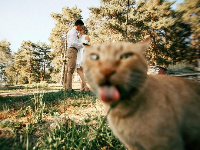 20 случайно испорченных снимков со свадьбы, ставших настоящей фотобомбой! рис 4