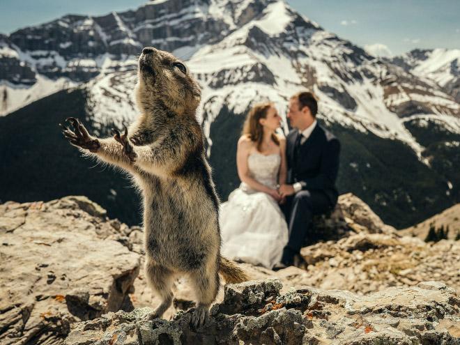 20 случайно испорченных снимков со свадьбы, ставших настоящей фотобомбой! рис 19
