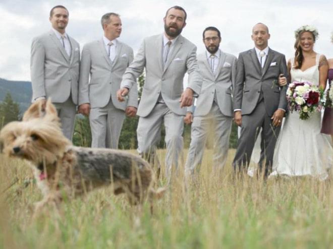 20 случайно испорченных снимков со свадьбы, ставших настоящей фотобомбой! рис 18