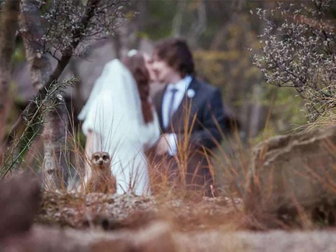 20 случайно испорченных снимков со свадьбы, ставших настоящей фотобомбой! рис 17