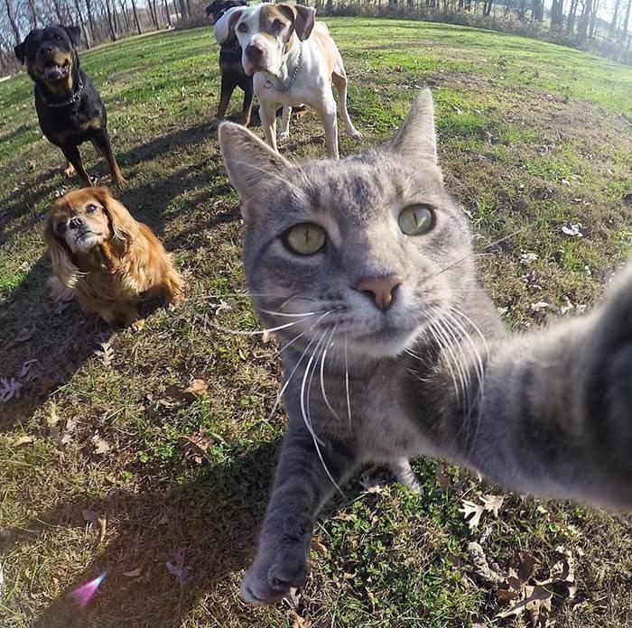 Селфи-кот покоряет сеть крутыми снимками! рис 2