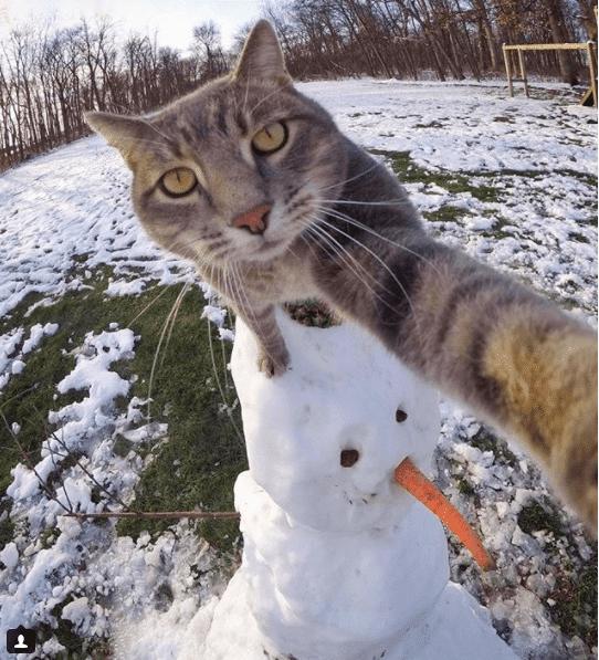 Селфи-кот покоряет сеть крутыми снимками! рис 3