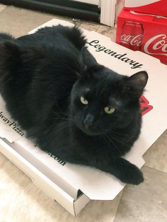 14 кошек и собак, которые без ума от пиццы!