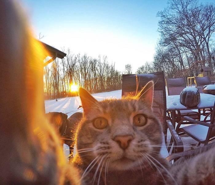 Селфи-кот покоряет сеть крутыми снимками! рис 4