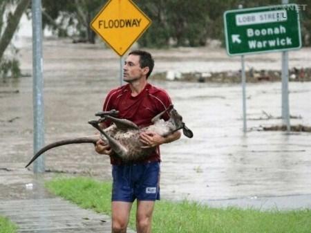 Тем временем в Австралии... рис 11